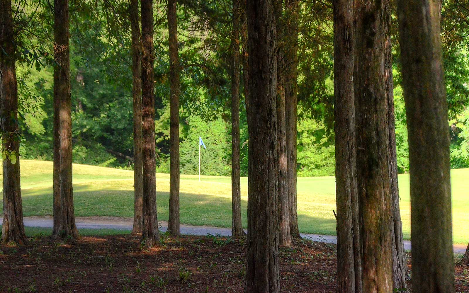 Birch-Creek-Golf-Course,-Union,-MO-Club-Trees