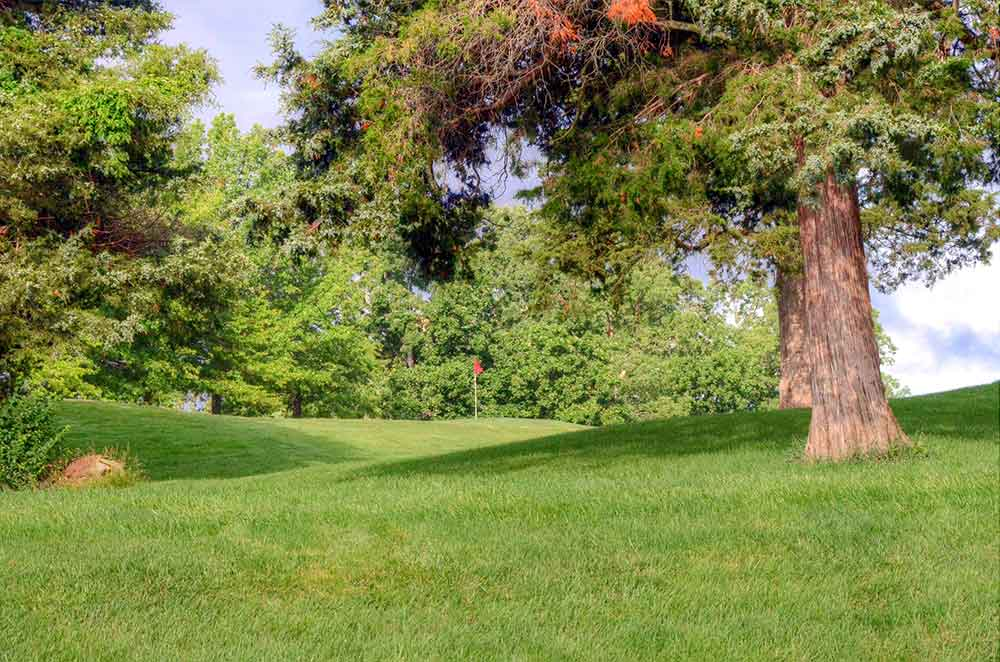 Country-Lake-Golf-Club,-Warrenton,-MO-Pine