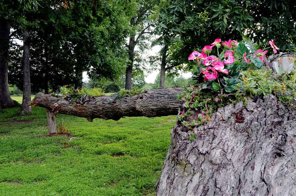 Country-Lake-Golf-Club,-Warrenton,-MO-Tree