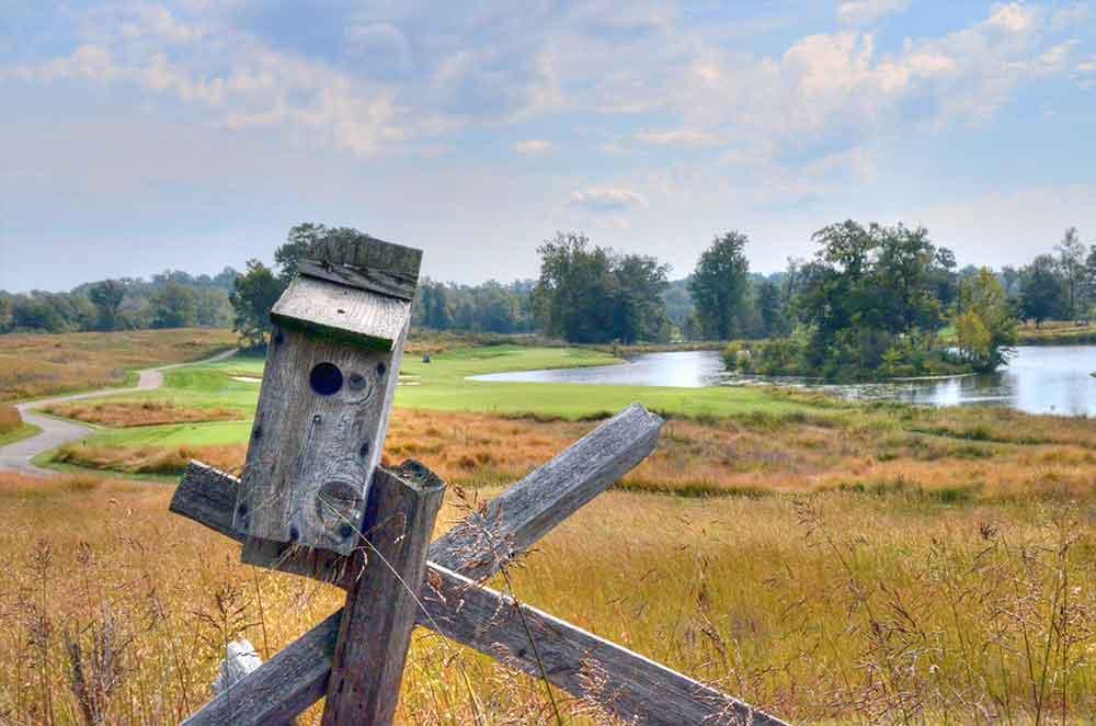 Dalhousie-Golf-Club,-Cape-Girardeau,-MO-Birdhouse