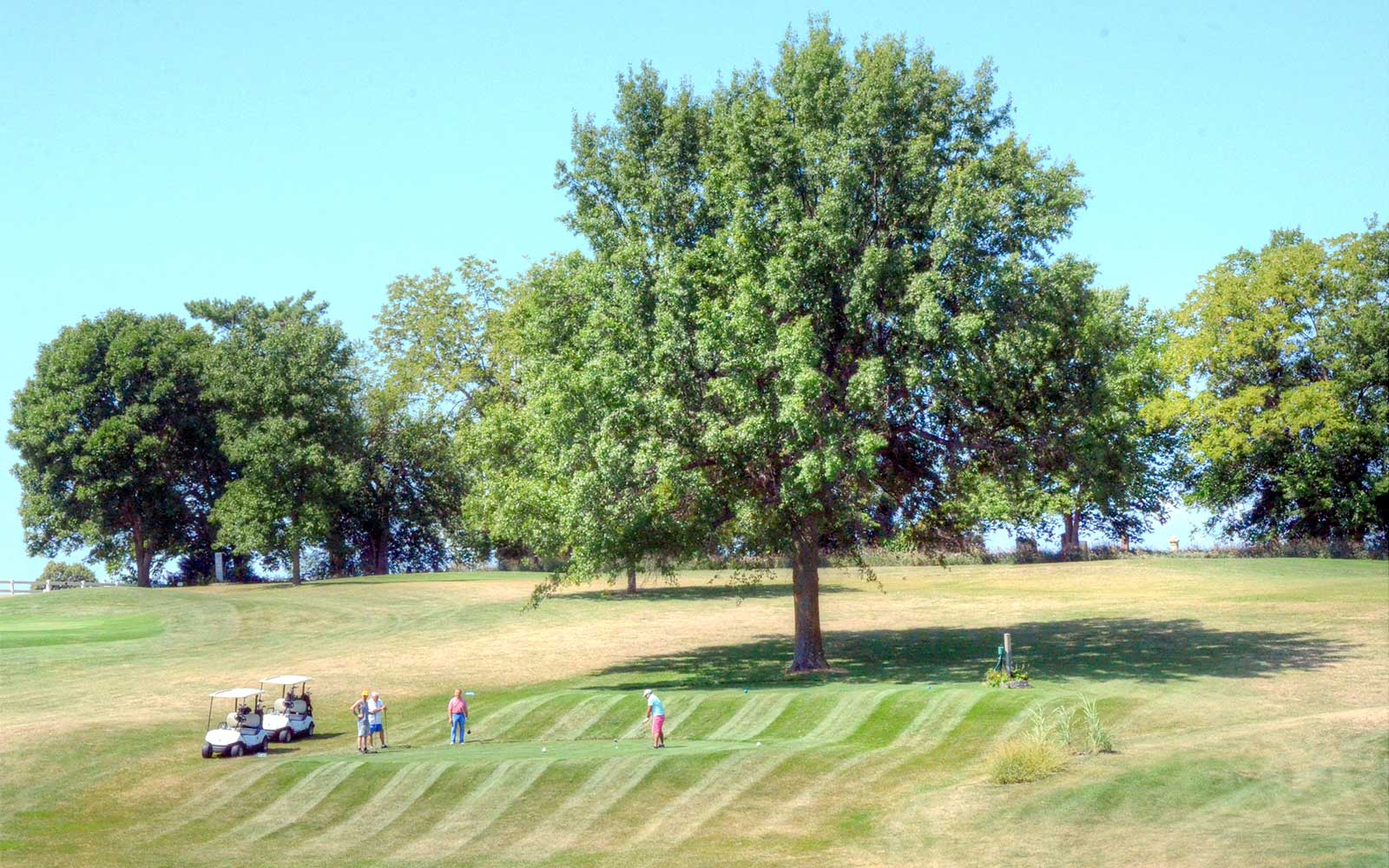Mound-City-Golf-Club,-Mound-City,-MO-Tree