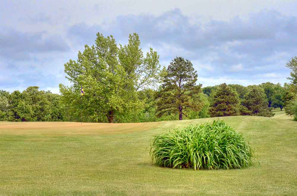 Oak-Hills-Country-Club,-Dixon,-MO-Bush