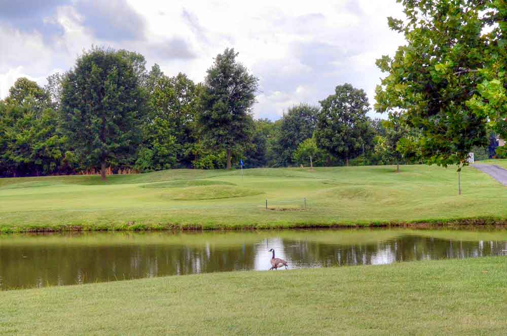 The-Falls-Golf-Club,-O'Fallon,-MO-Goose